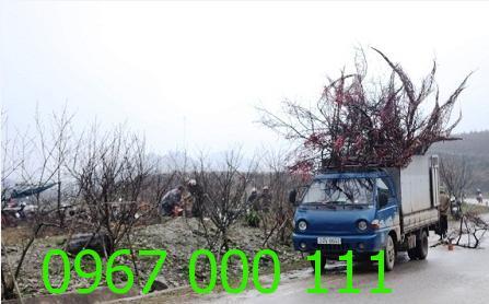 Taxi tải chở hàng đón tết Bính Thân 2016