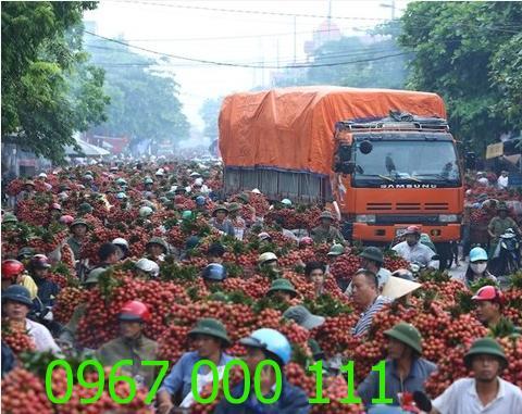 Thuê xe tải chở vải Bắc Giang-Hưng Yên-Hà Nội-Bắc Nam
